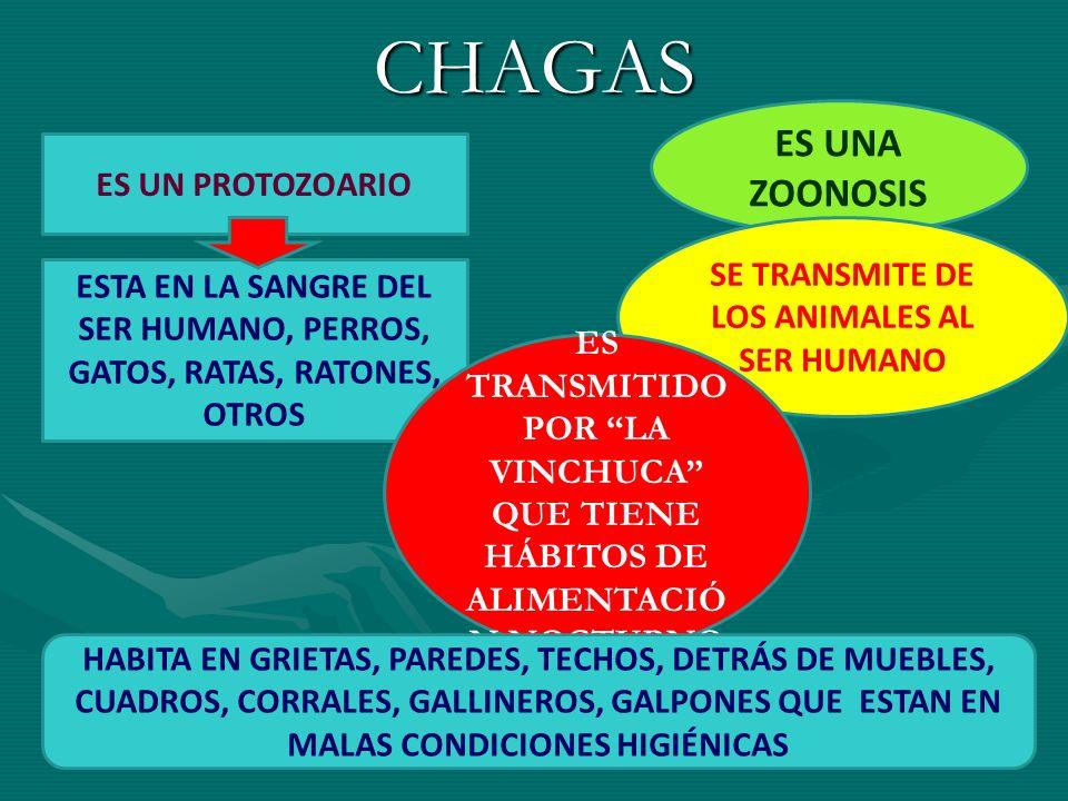 CHAGAS ES UNA ZOONOSIS SE TRANSMITE DE LOS ANIMALES AL SER HUMANO ES UN PROTOZOARIO ESTA EN LA SANGRE DEL SER HUMANO, PERROS, GATOS, RATAS, RATONES, O