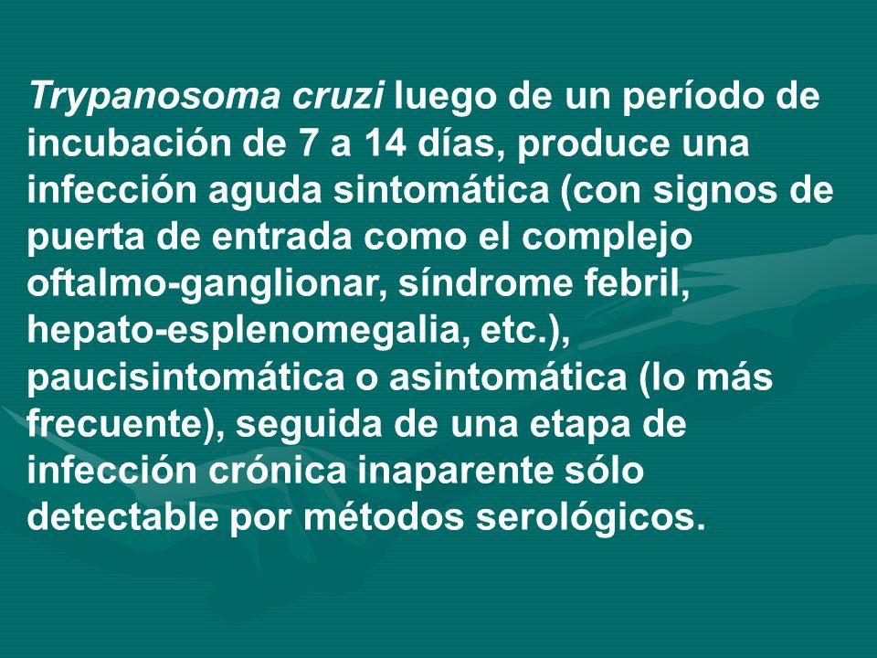Trypanosoma cruzi luego de un período de incubación de 7 a 14 días, produce una infección aguda sintomática (con signos de puerta de entrada como el c