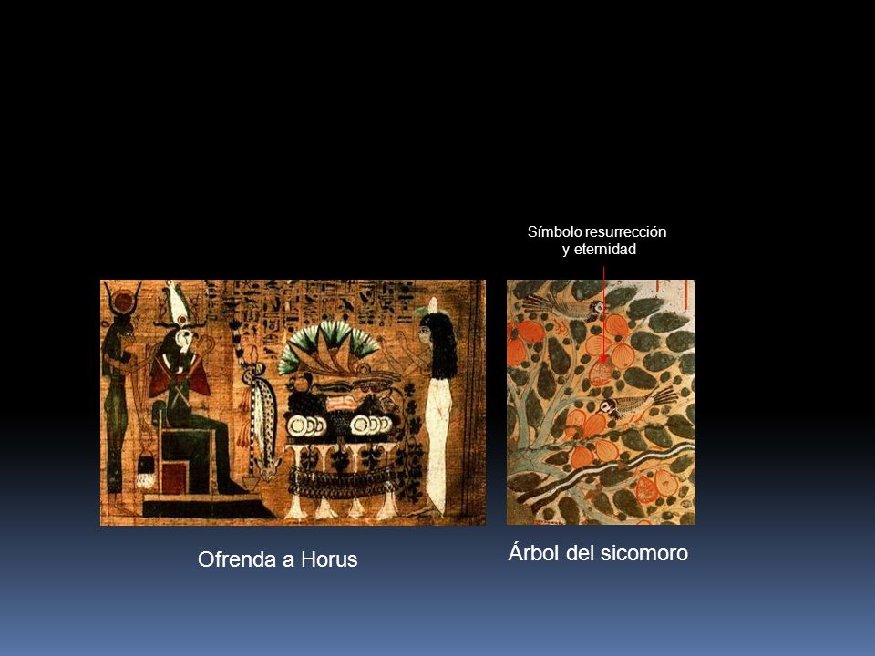 Ofrenda a Horus Árbol del sicomoro Símbolo resurrección y eternidad