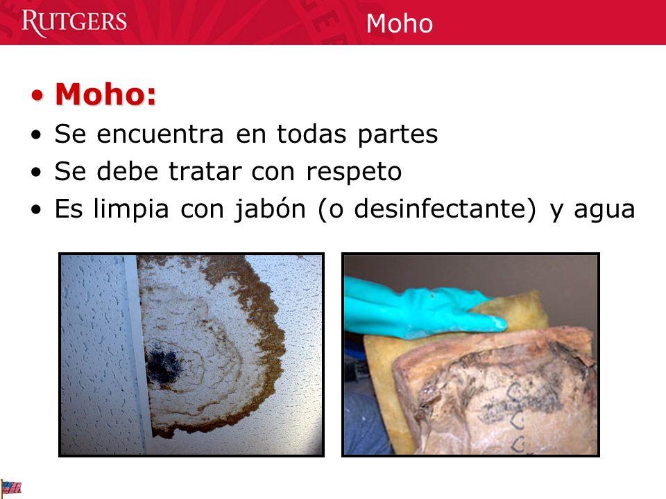 Moho Moho:Moho: Se encuentra en todas partes Se debe tratar con respeto Es limpia con jabón (o desinfectante) y agua