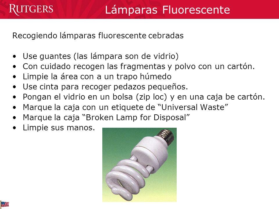 Lámparas Fluorescente Recogiendo lámparas fluorescente cebradas Use guantes (las lámpara son de vidrio) Con cuidado recogen las fragmentas y polvo con