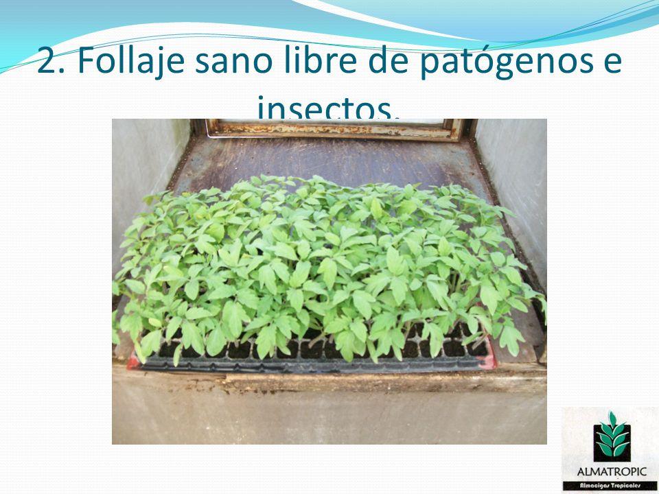 2. Follaje sano libre de patógenos e insectos.