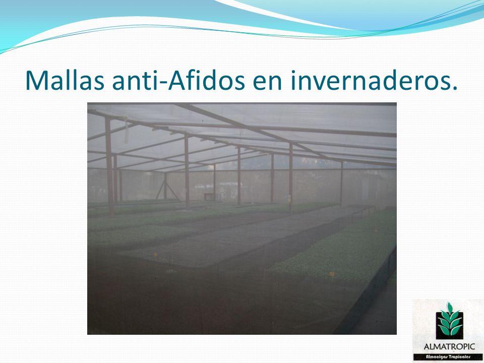 Mallas anti-Afidos en invernaderos.