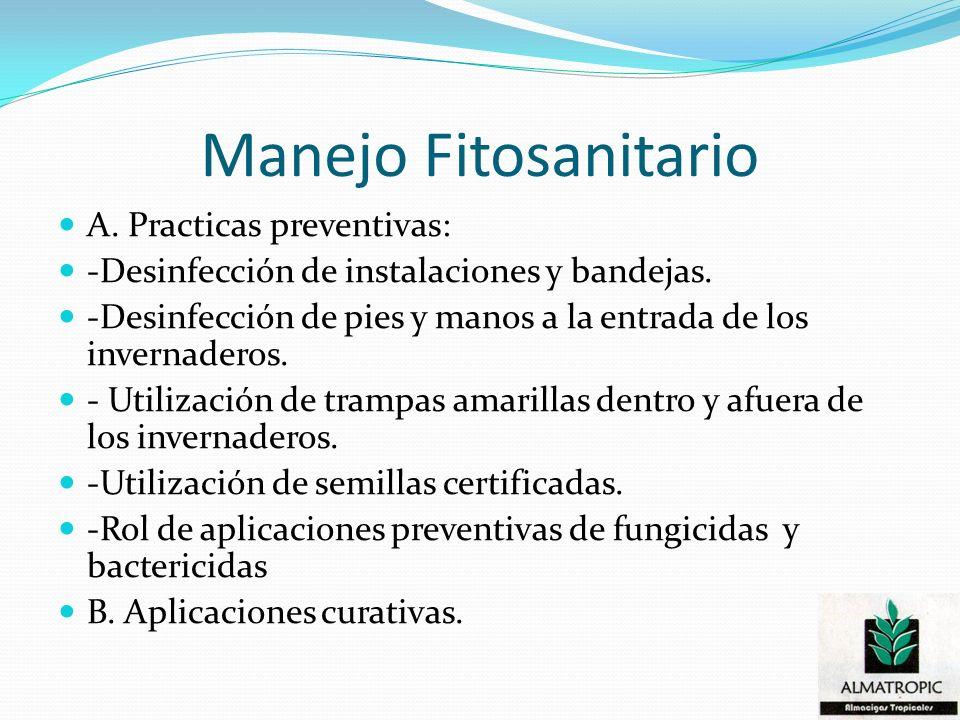 Manejo Fitosanitario A. Practicas preventivas: -Desinfección de instalaciones y bandejas. -Desinfección de pies y manos a la entrada de los invernader