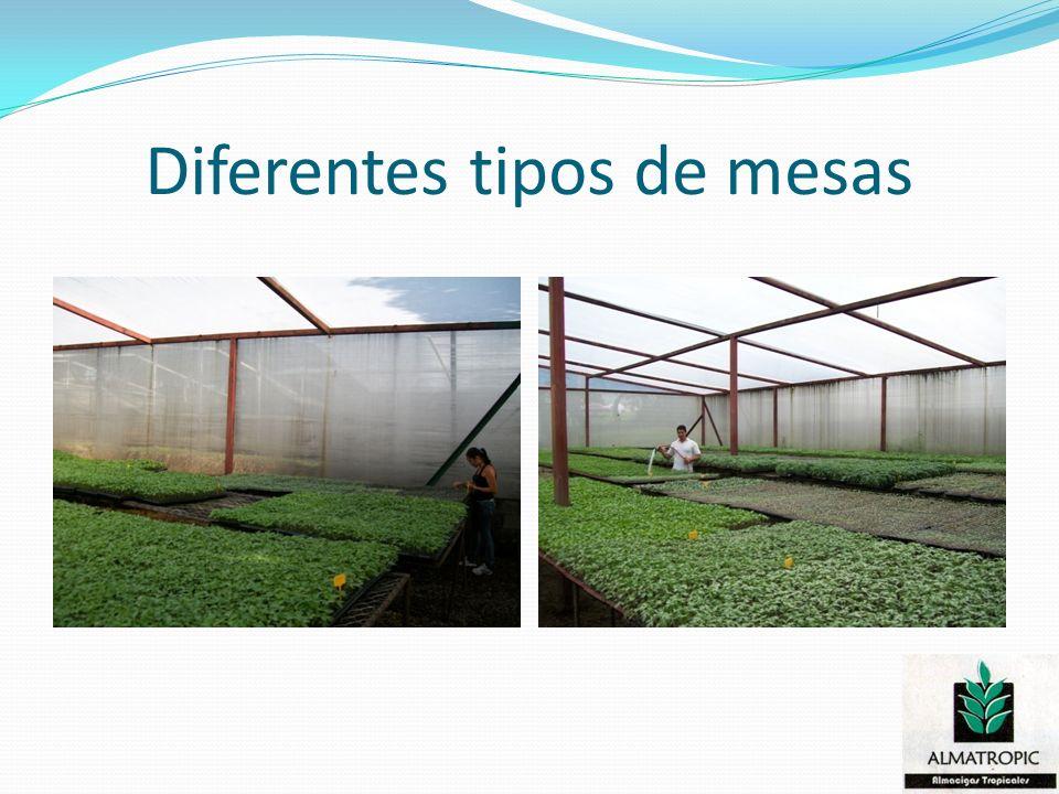Sales y tipos de bandejas utilizadas en la producción de plántulas.