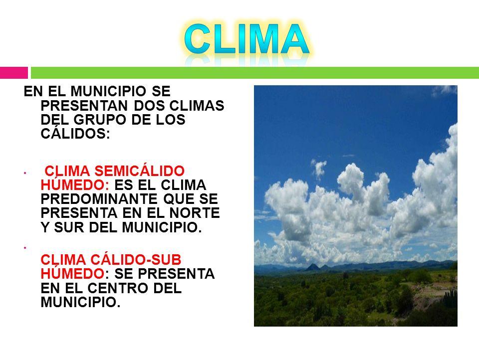 EN EL MUNICIPIO SE PRESENTAN DOS CLIMAS DEL GRUPO DE LOS CÁLIDOS: CLIMA SEMICÁLIDO HÚMEDO: ES EL CLIMA PREDOMINANTE QUE SE PRESENTA EN EL NORTE Y SUR