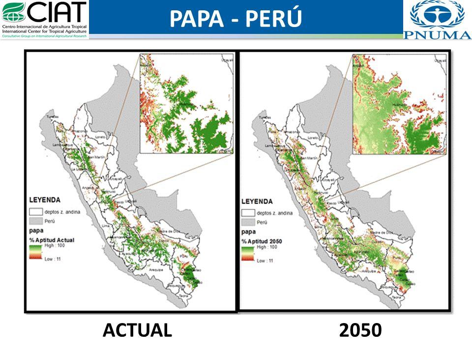 PAPA - PERÚ ACTUAL2050