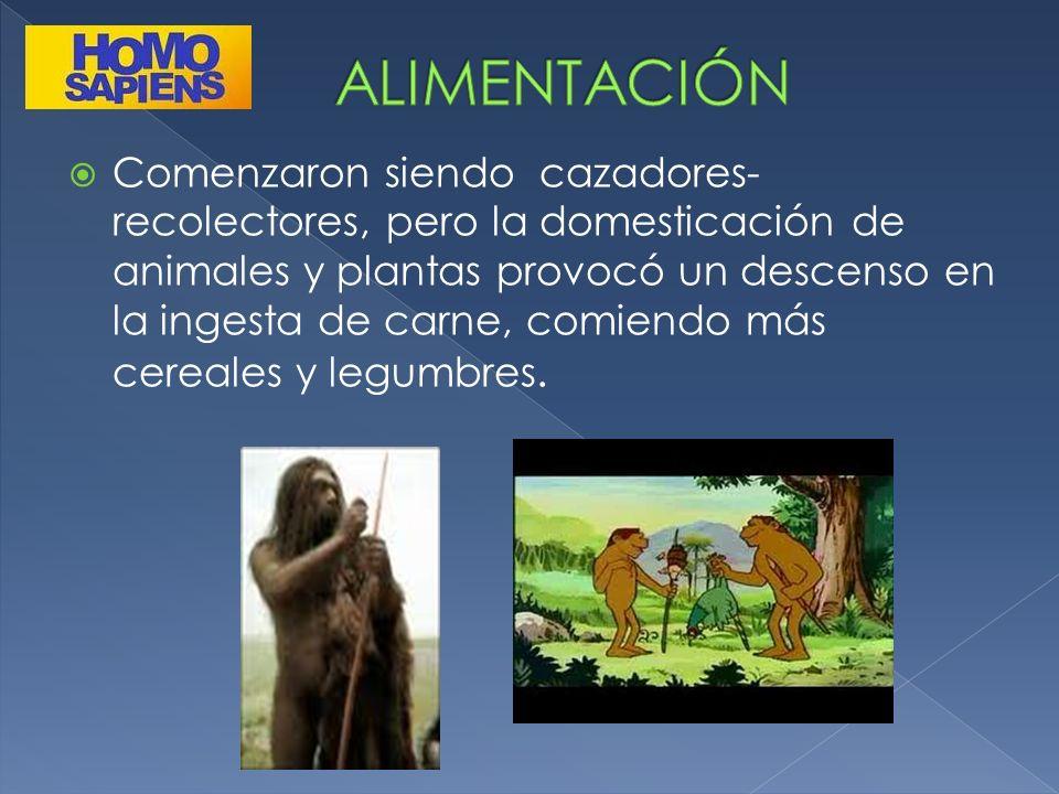 Comenzaron siendo cazadores- recolectores, pero la domesticación de animales y plantas provocó un descenso en la ingesta de carne, comiendo más cereal