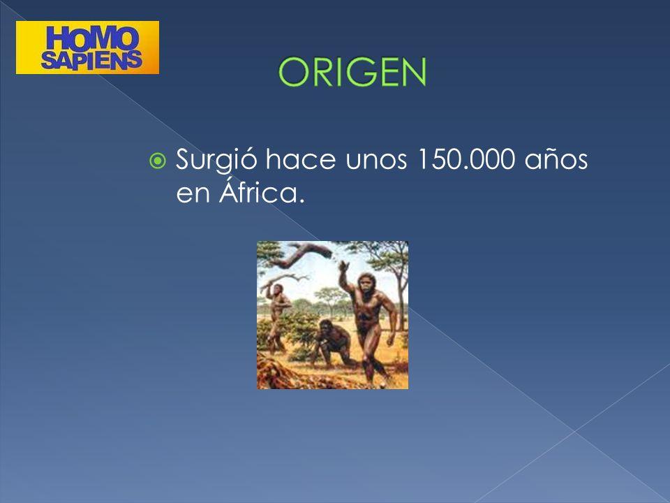 Surgió hace unos 150.000 años en África.