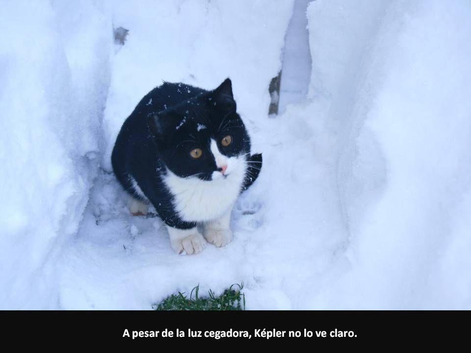 A pesar de la luz cegadora, Képler no lo ve claro.