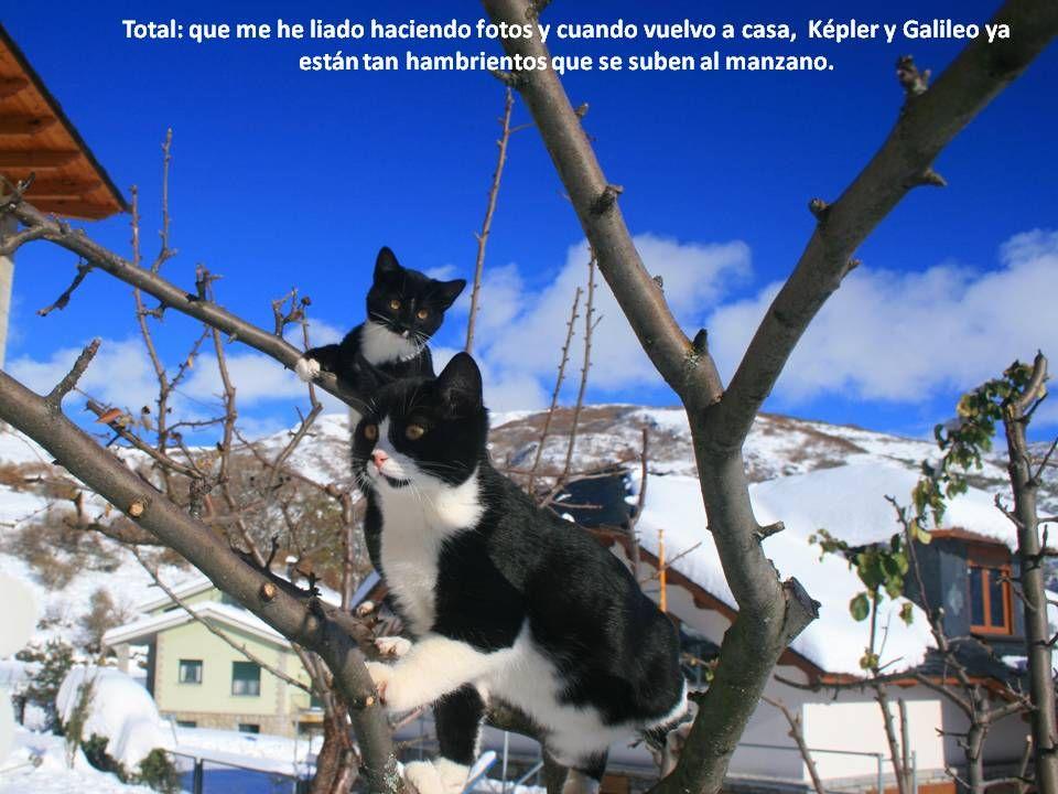 Total: que me he liado haciendo fotos y cuando vuelvo a casa, Képler y Galileo ya están tan hambrientos que se suben al manzano.