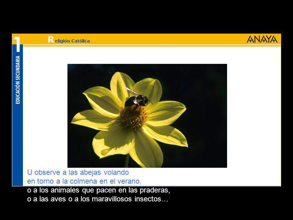 U observe a las abejas volando en torno a la colmena en el verano, o a los animales que pacen en las praderas, o a las aves o a los maravillosos insectos…
