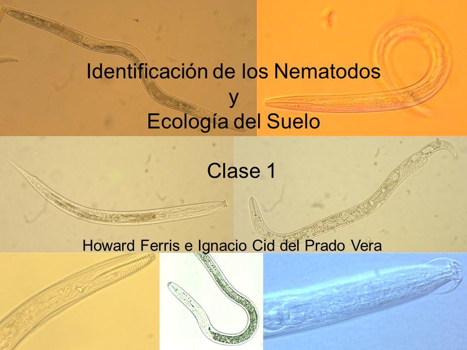 Identificación de los Nematodos y Ecología del Suelo Clase 1 Howard Ferris e Ignacio Cid del Prado Vera