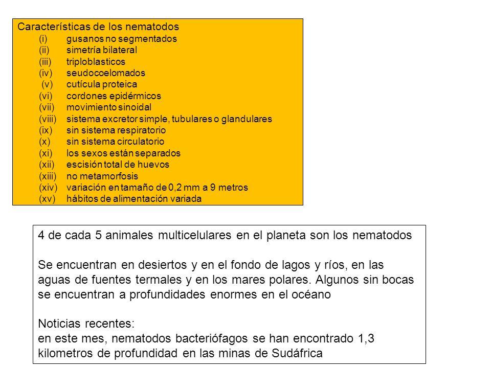 Características de los nematodos (i) gusanos no segmentados (ii) simetría bilateral (iii) triploblasticos (iv) seudocoelomados (v) cutícula proteica (