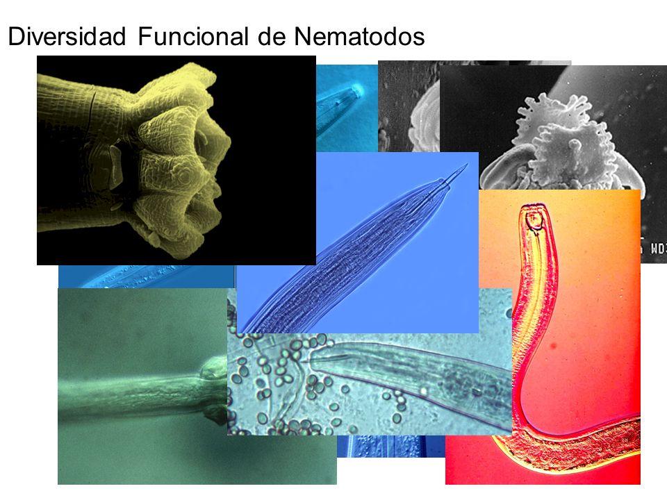 Diversidad Funcional de Nematodos