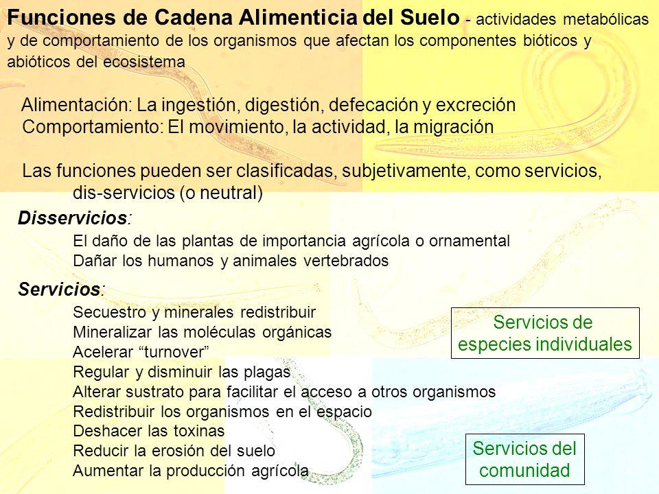 Servicios de especies individuales Servicios del comunidad Funciones de Cadena Alimenticia del Suelo - actividades metabólicas y de comportamiento de