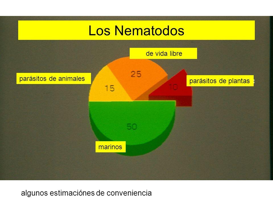 Los Nematodos parásitos de animales parásitos de plantas marinos de vida libre algunos estimaciónes de conveniencia