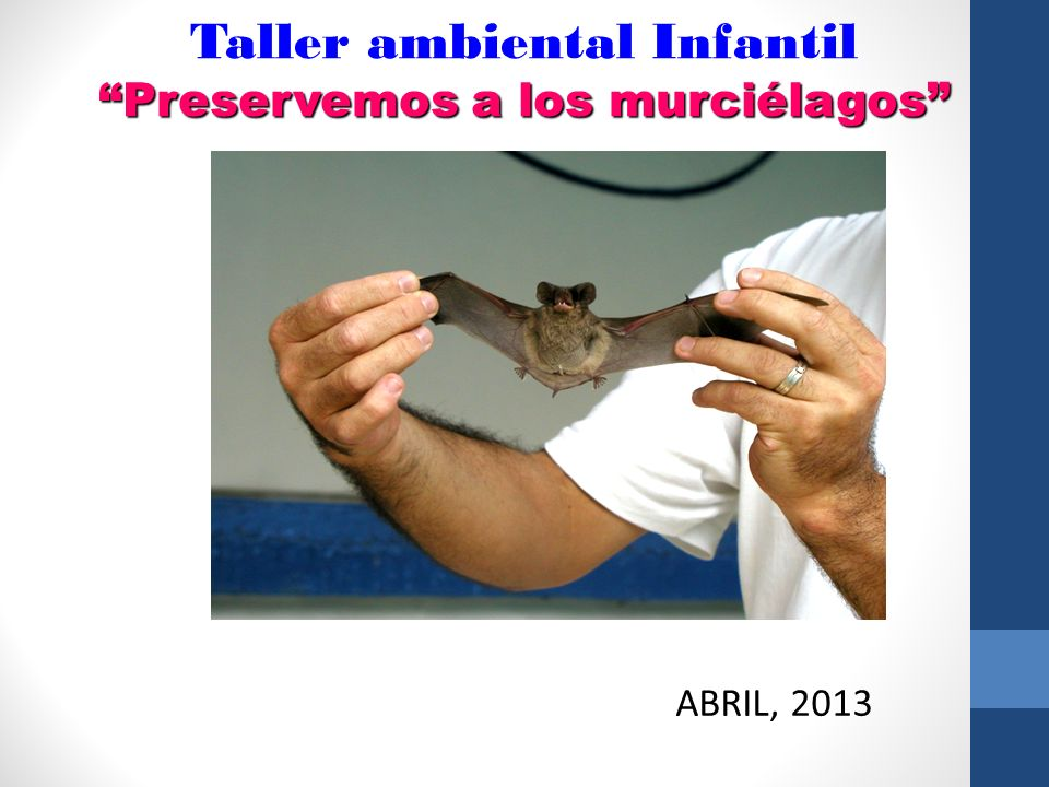 Taller ambiental Infantil Preservemos a los murciélagos ABRIL, 2013