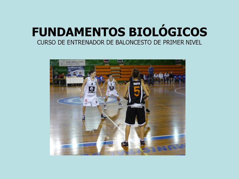 EL MÚSCULO ESQUELÉTICO (10) El huso neuromuscular.