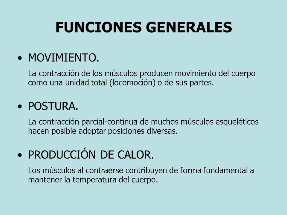 FUNCIONES GENERALES MOVIMIENTO. La contracción de los músculos producen movimiento del cuerpo como una unidad total (locomoción) o de sus partes. POST