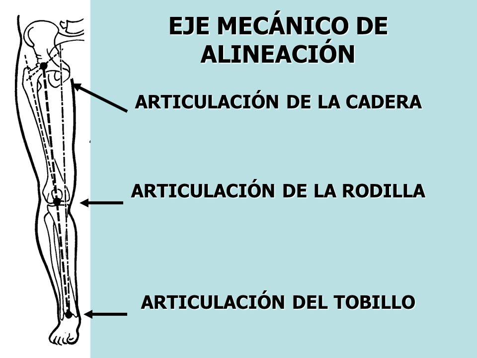 EJE MECÁNICO DE ALINEACIÓN ARTICULACIÓN DE LA CADERA ARTICULACIÓN DE LA RODILLA ARTICULACIÓN DEL TOBILLO