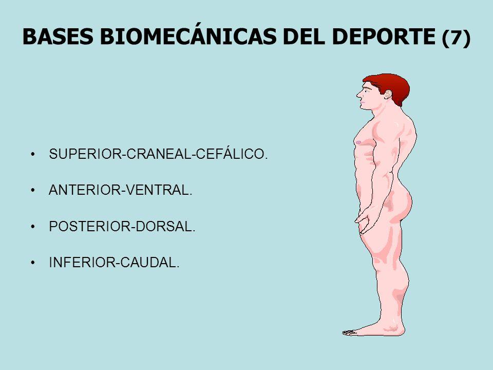 BASES BIOMECÁNICAS DEL DEPORTE (7) SUPERIOR-CRANEAL-CEFÁLICO. ANTERIOR-VENTRAL. POSTERIOR-DORSAL. INFERIOR-CAUDAL.