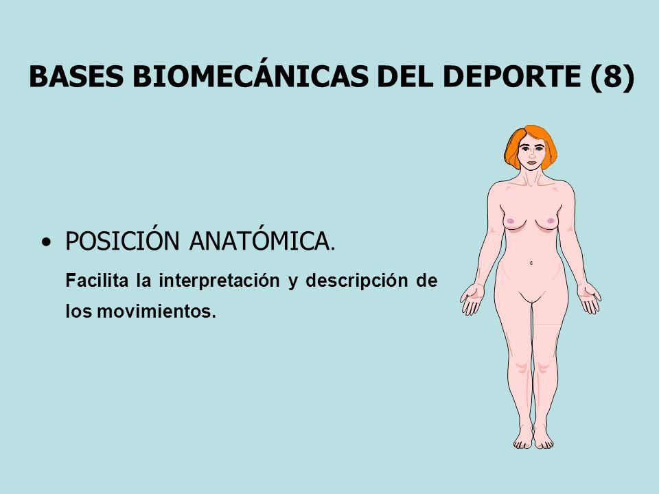 BASES BIOMECÁNICAS DEL DEPORTE (8) POSICIÓN ANATÓMICA. Facilita la interpretación y descripción de los movimientos.