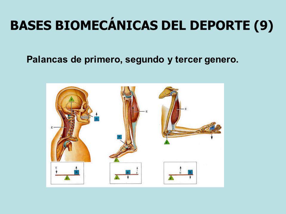 BASES BIOMECÁNICAS DEL DEPORTE (9) Palancas de primero, segundo y tercer genero.