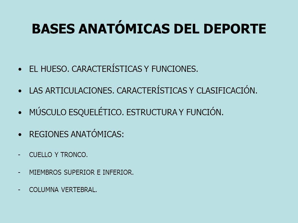 BASES ANATÓMICAS DEL DEPORTE EL HUESO. CARACTERÍSTICAS Y FUNCIONES. LAS ARTICULACIONES. CARACTERÍSTICAS Y CLASIFICACIÓN. MÚSCULO ESQUELÉTICO. ESTRUCTU