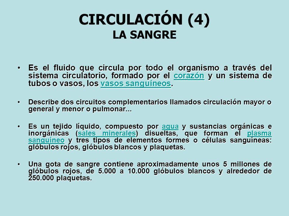 CIRCULACIÓN (4) LA SANGRE Es el fluido que circula por todo el organismo a través del sistema circulatorio, formado por el corazón y un sistema de tub