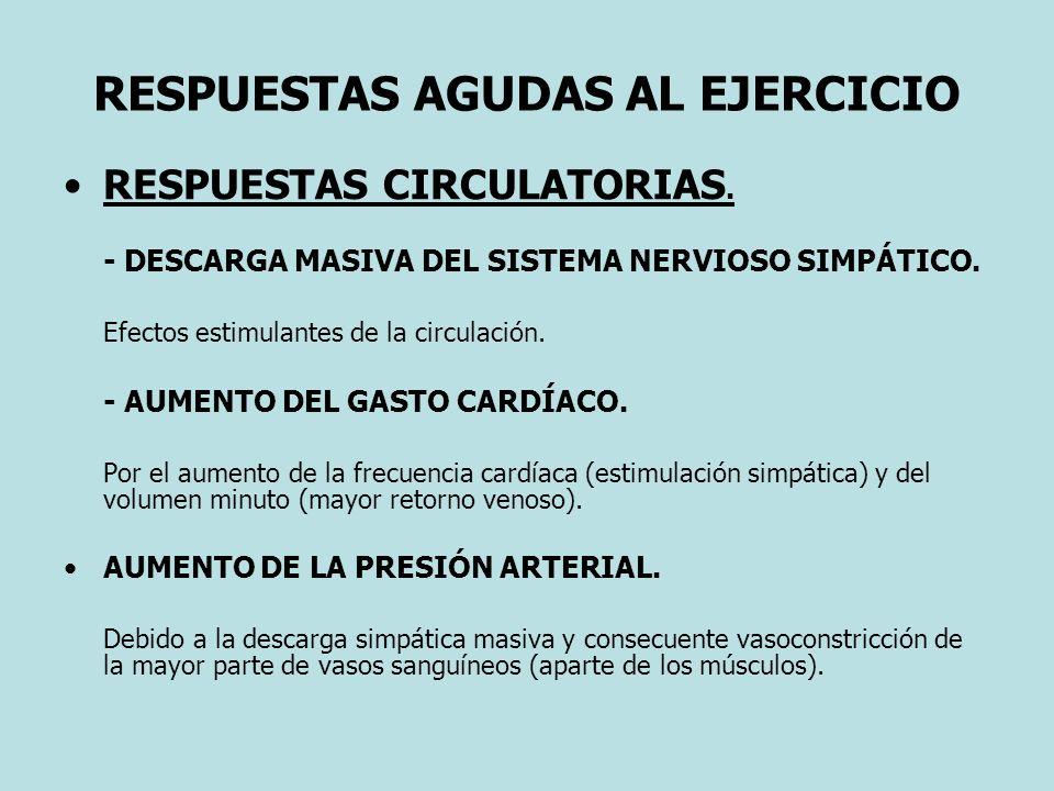 RESPUESTAS AGUDAS AL EJERCICIO RESPUESTAS CIRCULATORIAS. - DESCARGA MASIVA DEL SISTEMA NERVIOSO SIMPÁTICO. Efectos estimulantes de la circulación. - A