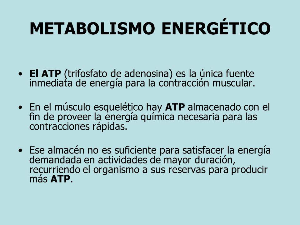 METABOLISMO ENERGÉTICO El ATP (trifosfato de adenosina) es la única fuente inmediata de energía para la contracción muscular. En el músculo esquelétic