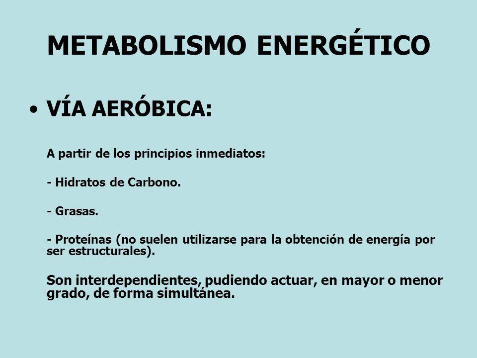 METABOLISMO ENERGÉTICO VÍA AERÓBICA: A partir de los principios inmediatos: - Hidratos de Carbono. - Grasas. - Proteínas (no suelen utilizarse para la