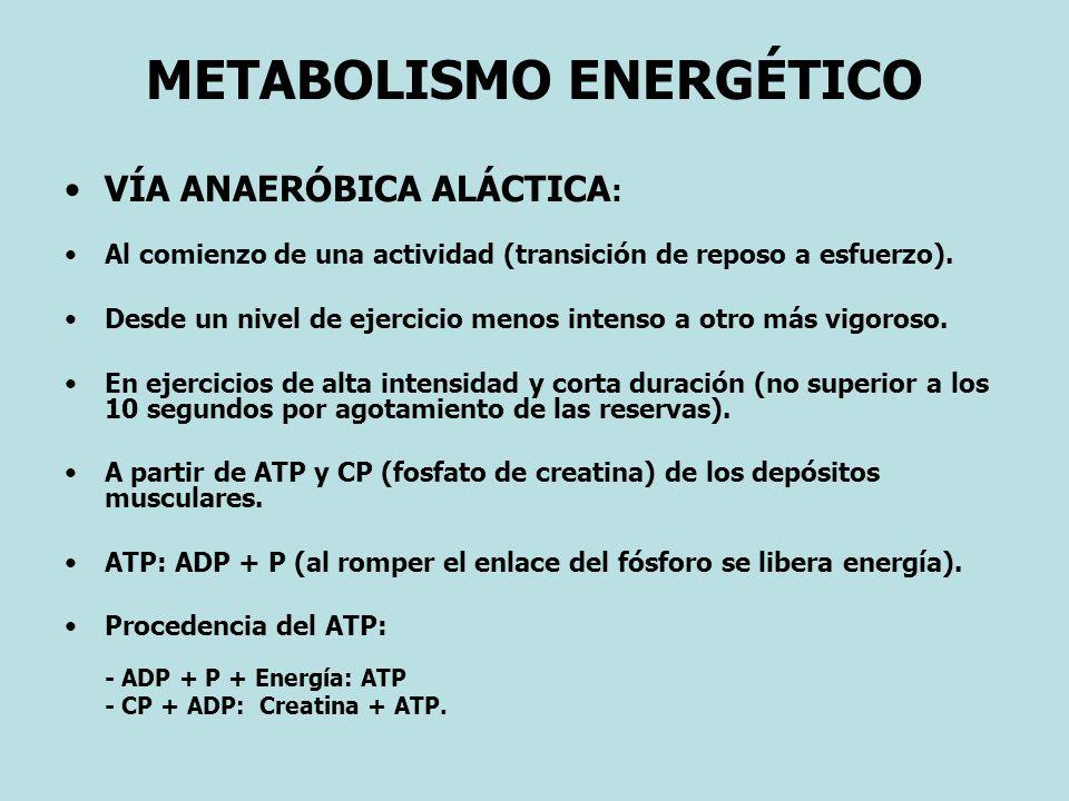 METABOLISMO ENERGÉTICO VÍA ANAERÓBICA ALÁCTICA : Al comienzo de una actividad (transición de reposo a esfuerzo). Desde un nivel de ejercicio menos int