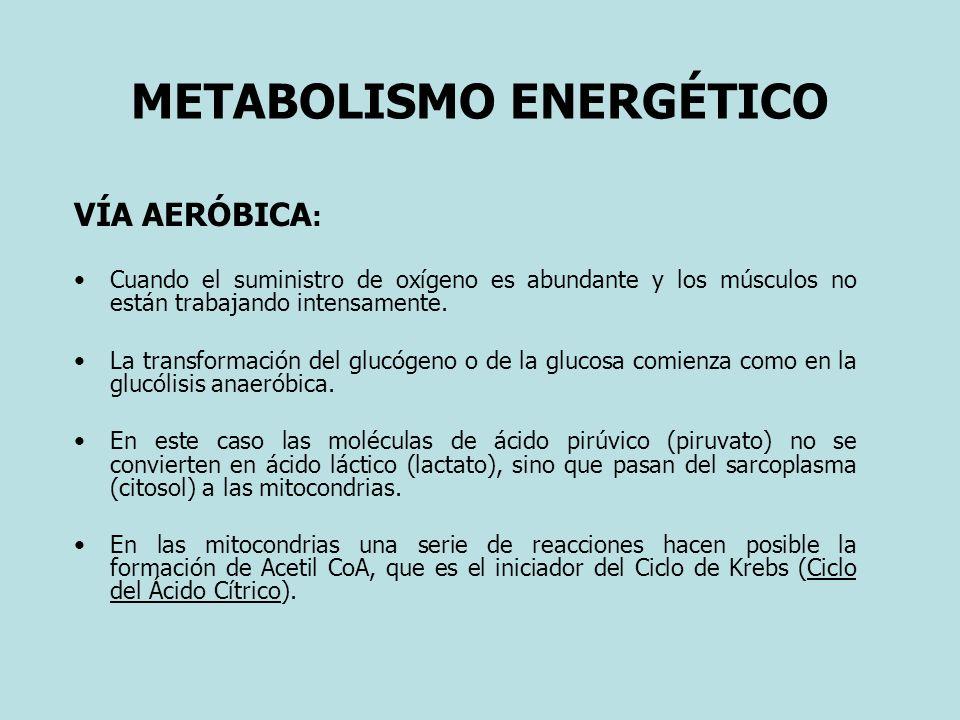 METABOLISMO ENERGÉTICO VÍA AERÓBICA : Cuando el suministro de oxígeno es abundante y los músculos no están trabajando intensamente. La transformación