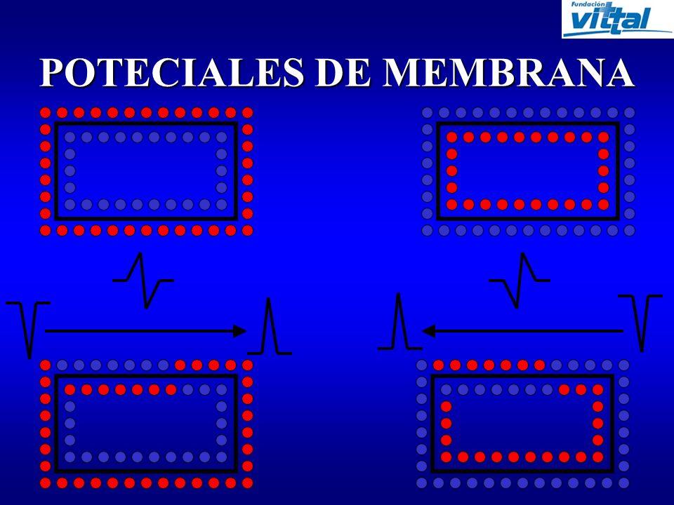 COMPLEJO QRS TIEMPO DE DESPOLARIZACION VENTRICULAR QRS < 3 > 3 = 0,12 seg.