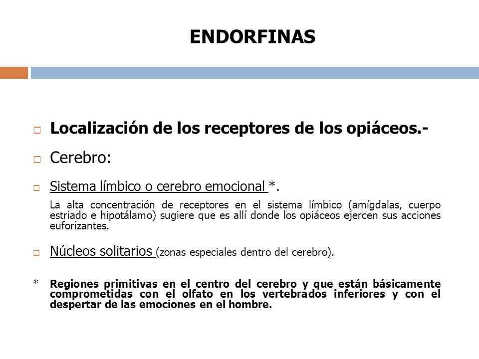 ENDORFINAS Localización de los receptores de los opiáceos.- Cerebro: Sistema límbico o cerebro emocional *.