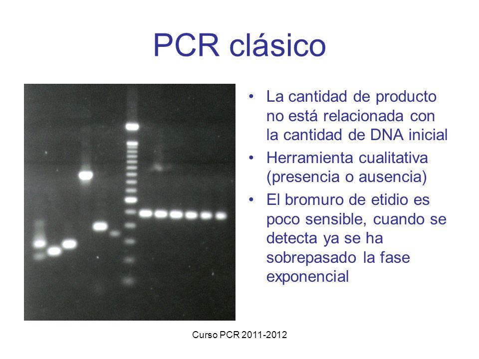 Curso PCR 2011-2012 PCR clásico La cantidad de producto no está relacionada con la cantidad de DNA inicial Herramienta cualitativa (presencia o ausencia) El bromuro de etidio es poco sensible, cuando se detecta ya se ha sobrepasado la fase exponencial