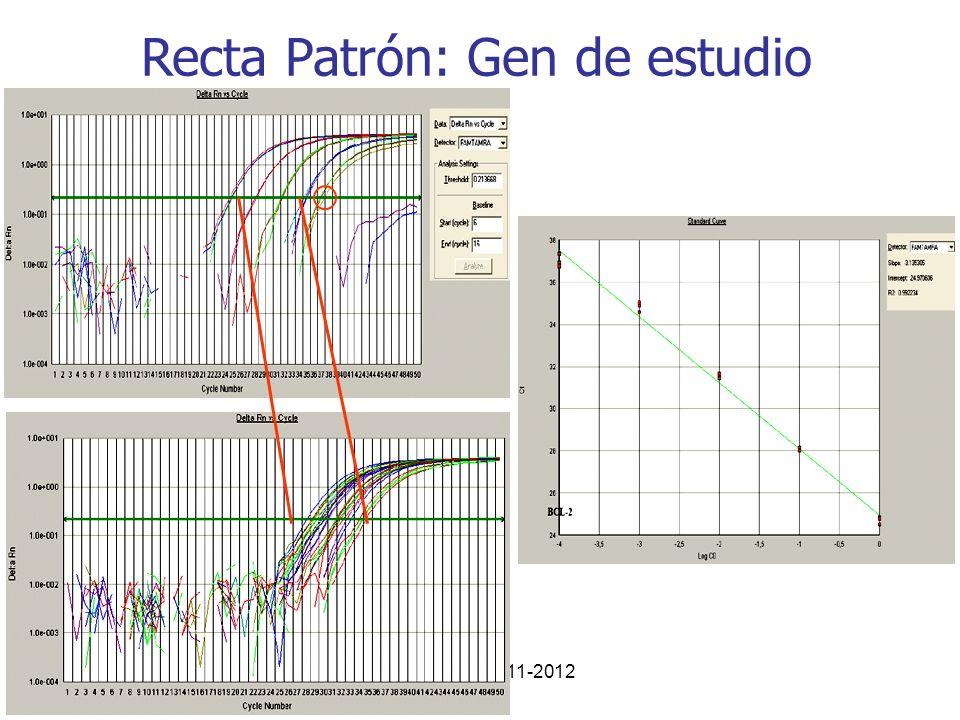 Curso PCR 2011-2012 Recta Patrón: Gen de estudio
