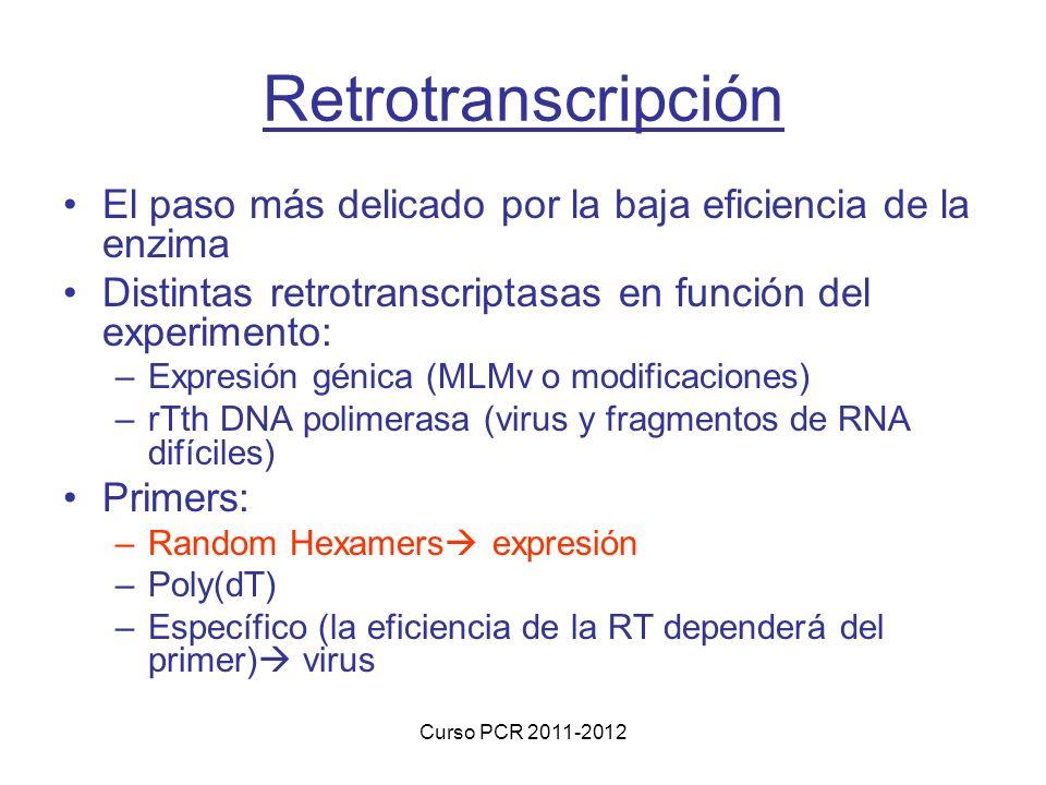 Curso PCR 2011-2012 Retrotranscripción El paso más delicado por la baja eficiencia de la enzima Distintas retrotranscriptasas en función del experimento: –Expresión génica (MLMv o modificaciones) –rTth DNA polimerasa (virus y fragmentos de RNA difíciles) Primers: –Random Hexamers expresión –Poly(dT) –Específico (la eficiencia de la RT dependerá del primer) virus