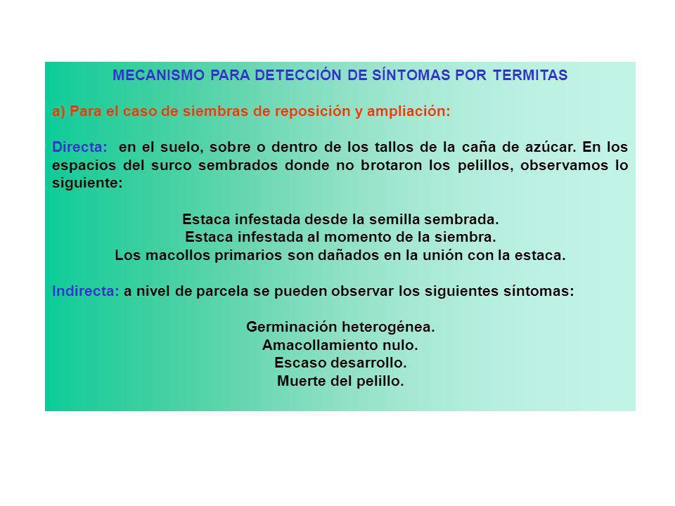 MECANISMO PARA DETECCIÓN DE SÍNTOMAS POR TERMITAS a) Para el caso de siembras de reposición y ampliación: Directa: en el suelo, sobre o dentro de los