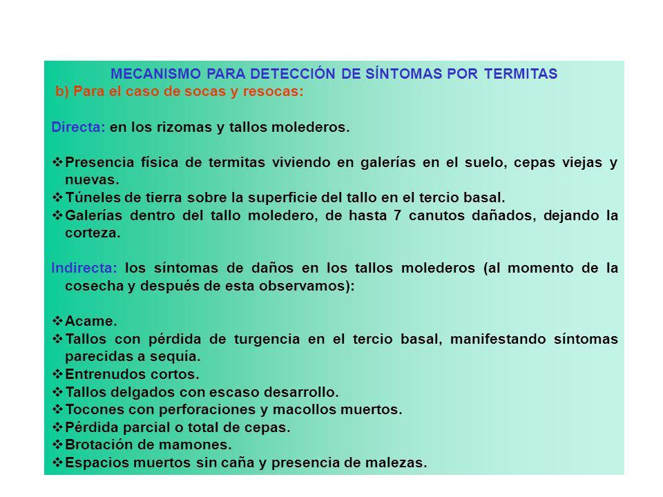 MECANISMO PARA DETECCIÓN DE SÍNTOMAS POR TERMITAS b) Para el caso de socas y resocas: Directa: en los rizomas y tallos molederos. Presencia física de