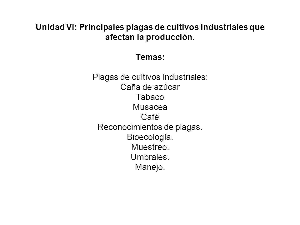 Unidad VI: Principales plagas de cultivos industriales que afectan la producción. Temas: Plagas de cultivos Industriales: Caña de azúcar Tabaco Musace