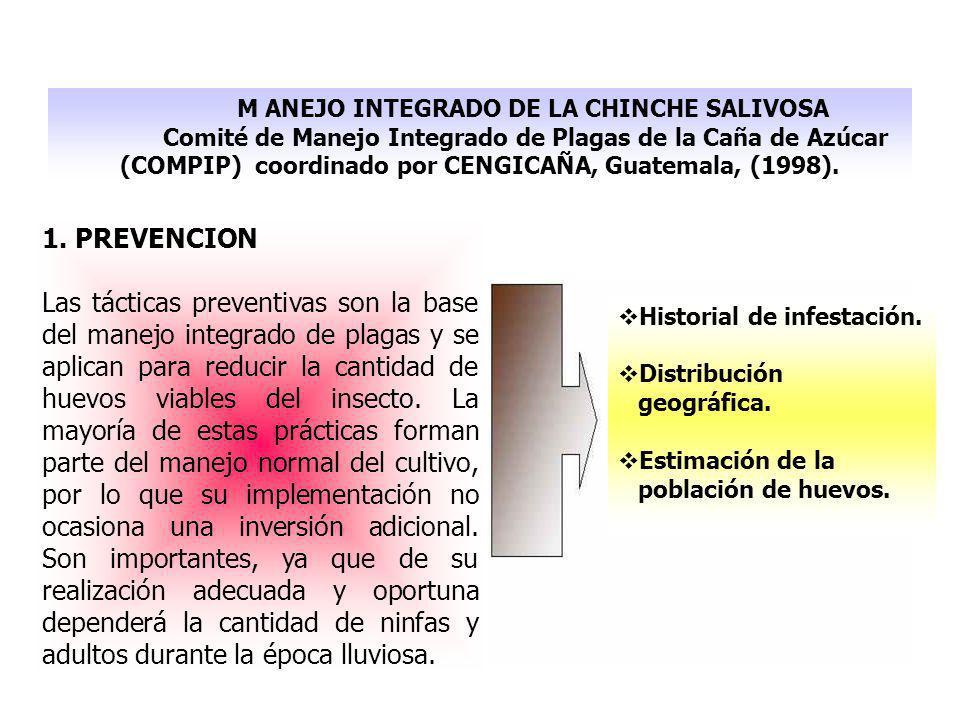 M ANEJO INTEGRADO DE LA CHINCHE SALIVOSA Comité de Manejo Integrado de Plagas de la Caña de Azúcar (COMPIP) coordinado por CENGICAÑA, Guatemala, (1998