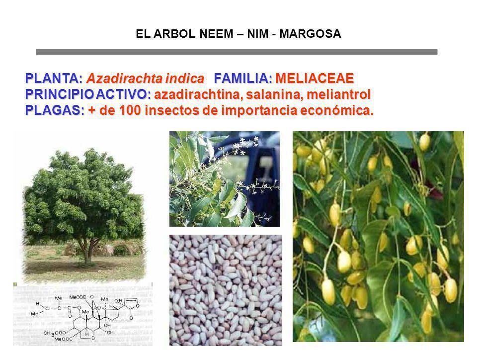 EL ARBOL NEEM – NIM - MARGOSA PLANTA: Azadirachta indica FAMILIA: MELIACEAE PRINCIPIO ACTIVO: azadirachtina, salanina, meliantrol PLAGAS: + de 100 ins