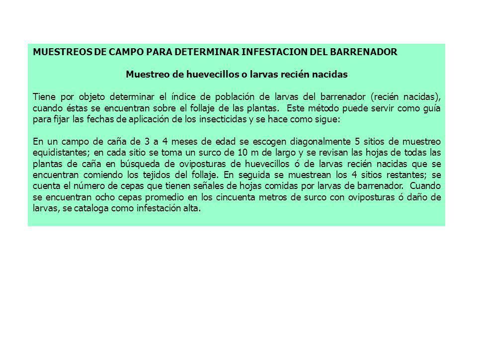 MUESTREOS DE CAMPO PARA DETERMINAR INFESTACION DEL BARRENADOR Muestreo de huevecillos o larvas recién nacidas Tiene por objeto determinar el índice de