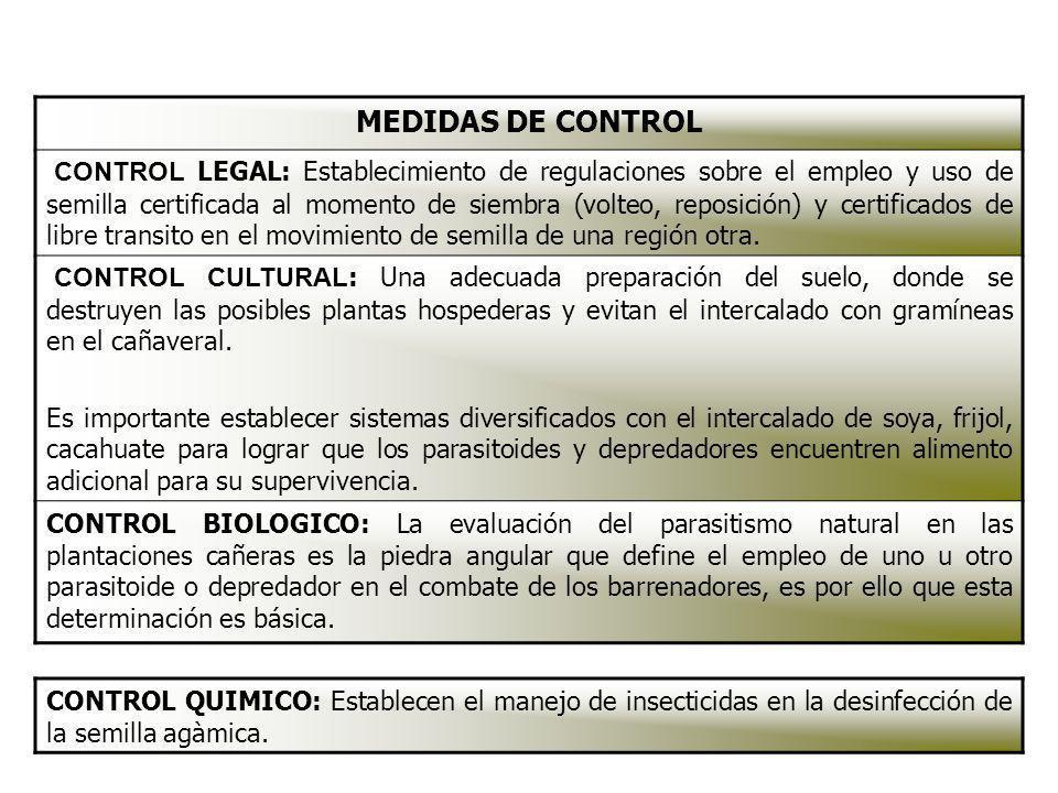 MEDIDAS DE CONTROL CONTROL LEGAL: Establecimiento de regulaciones sobre el empleo y uso de semilla certificada al momento de siembra (volteo, reposici