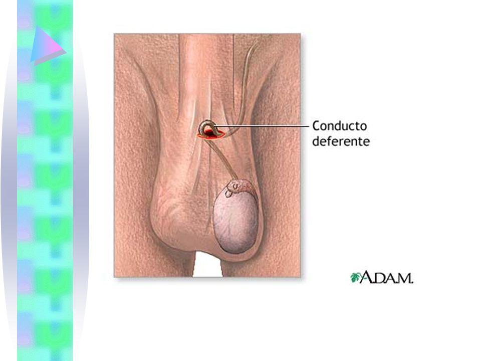 ANTICONCEPTIVOS HORMONALES DISPONIBLES EN CHILE1
