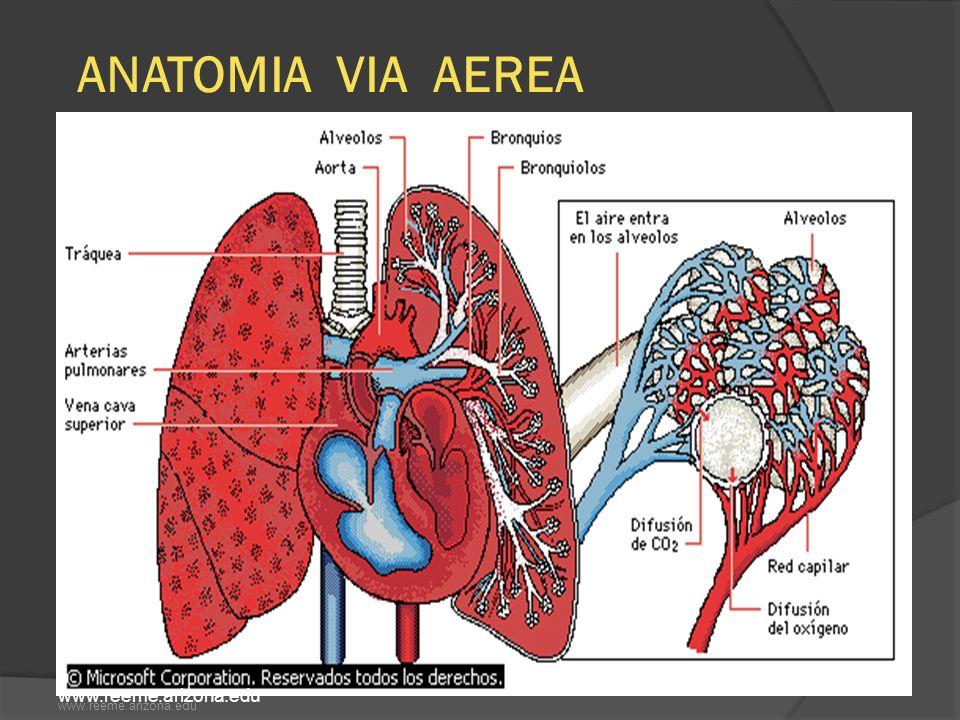 Depresión de la ventilación alveolar Atelectasias de reabsorción Edema pulmonar Fibrosis pulmonar Disminución de la concentración de hemoglobina