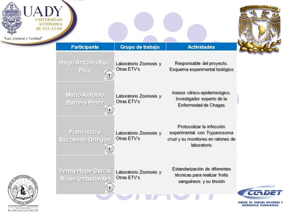 ParticipanteGrupo de trabajoActividades Hugo Antonio Ruiz Piña Laboratorio Zoonosis y Otras ETVs Responsable del proyecto. Esquema experimental biológ